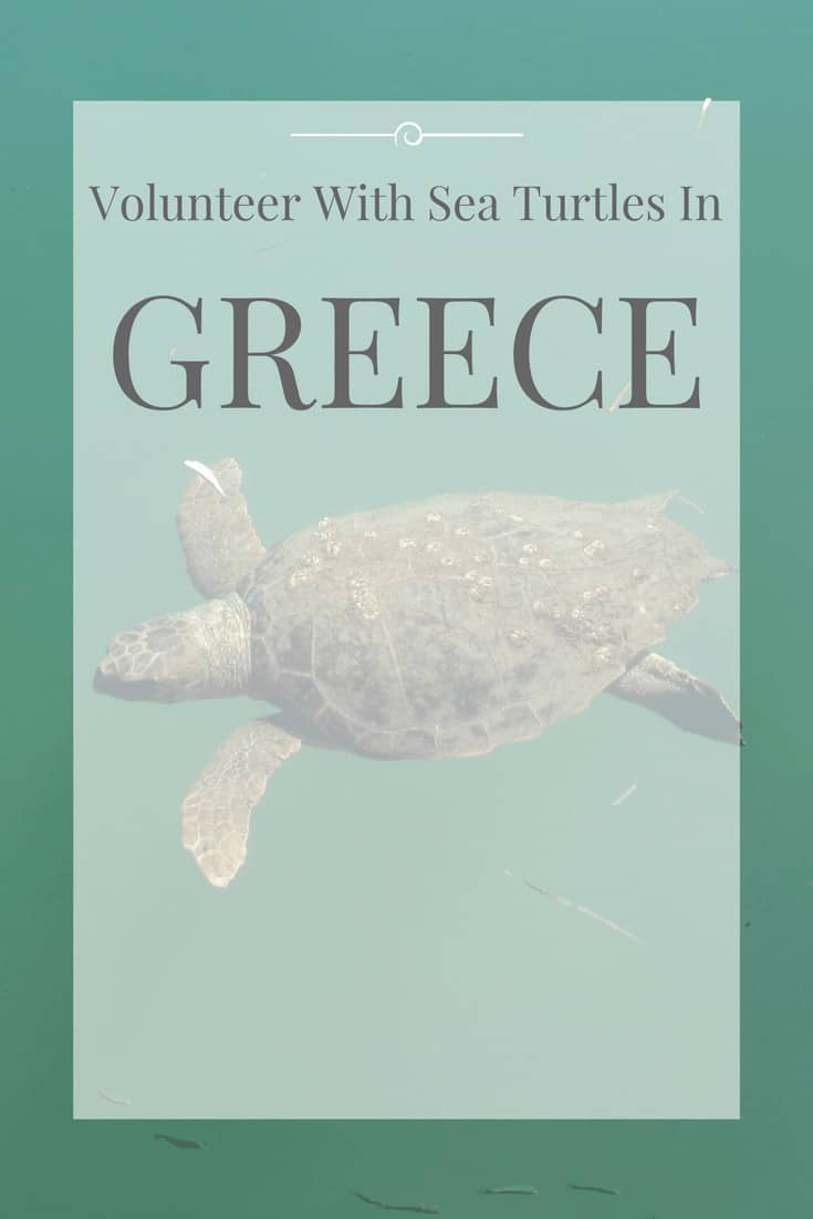 image with text over: volunteer with sea turtle in greece