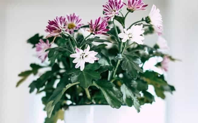 Purple and white flowers in a white container