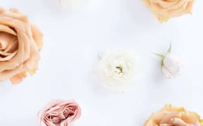 assorted flowers on a white background
