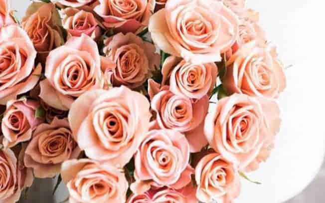 A bunch of peach roses