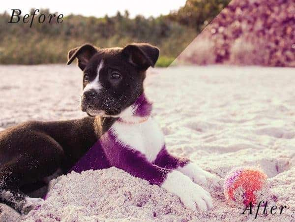 Before and After showing the effect that a preset has on an image. Image is of dog on the beach