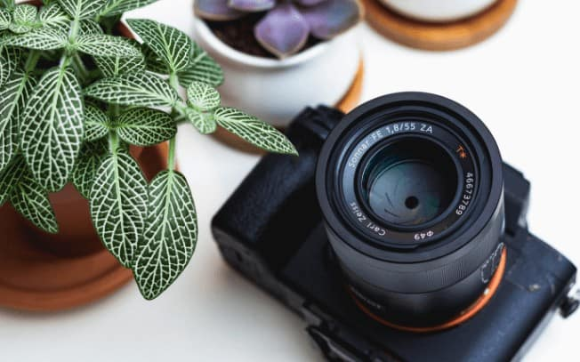 Camera on surface with a green plant beside it