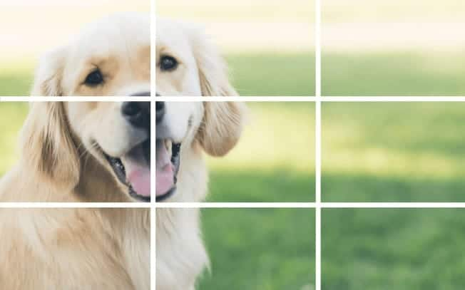 A photo of a golden retreiver divided up into 9 squares to demonstrate the rule of thirds