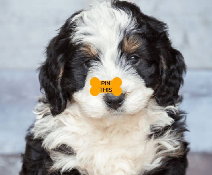 """A dog with a """"Pin This"""" icon in the shape of a bone"""