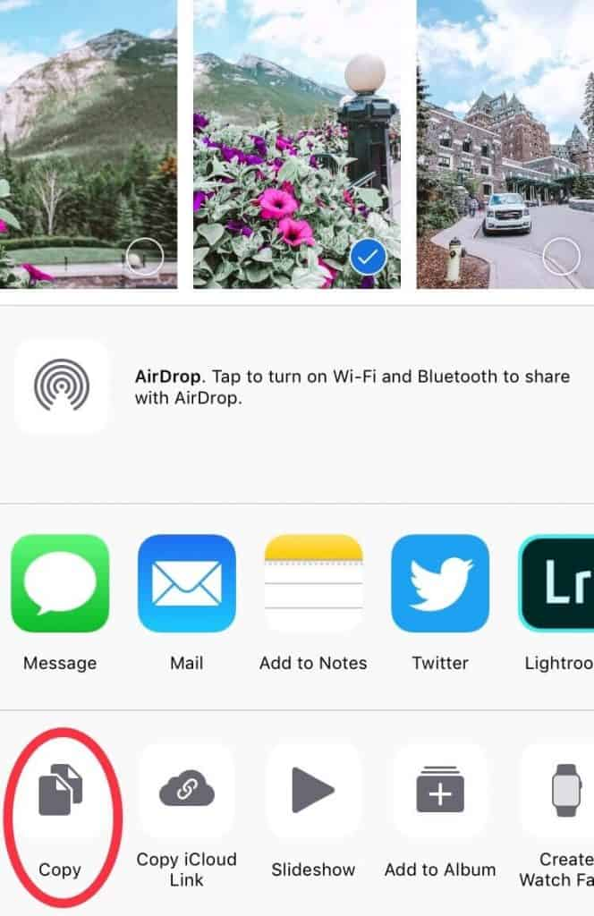 Screenshot of the camera roll on an iPhone