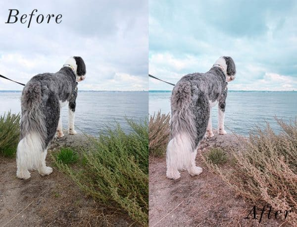 Before and after image of dog standing infront of the ocean