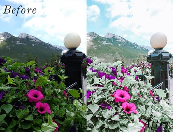 Before and after image of flowers and mountains